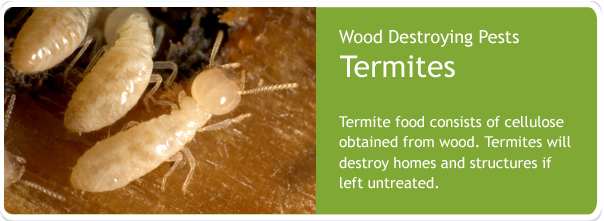 Termite Control, Termite Inspection, Pest Control, Brisbane, Sunshine Coast, Gold Coast & Ipswich