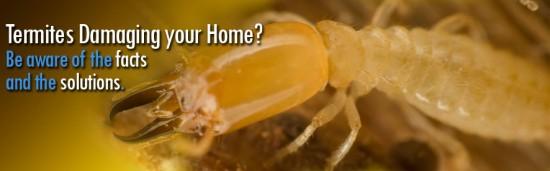 Termite Exterminators