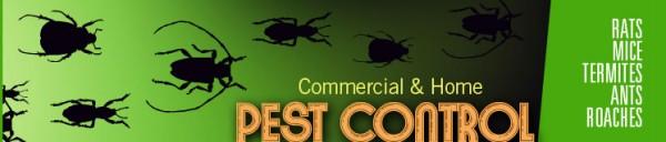 Termite & Pest Control Melbourne