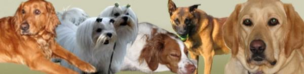Dog Grooming Baulkham Hills