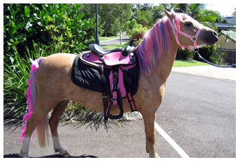 Pony Rides & Pony Parties Brisbane & Sunshine Coast