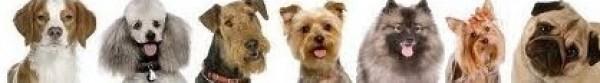 Dog Trainer & Dog Obedience Melbourne