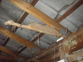 Termite Inspection Adelaide