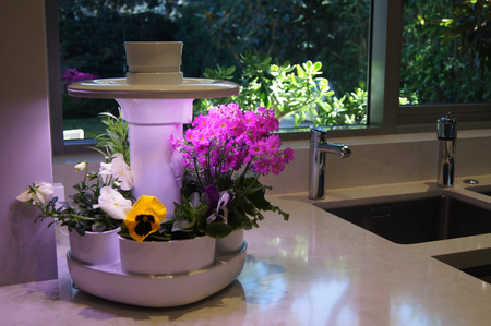 kitchen hydroponics