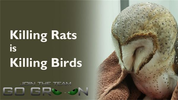 Bird Safe Rat Poison