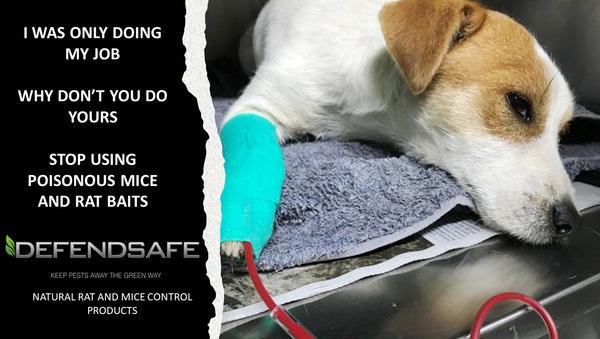 Pet Safe Mouse Baits