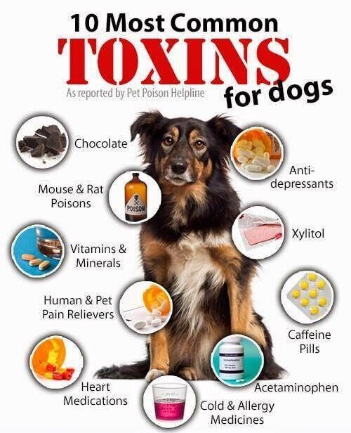 dog poisons